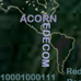 Acorn.png